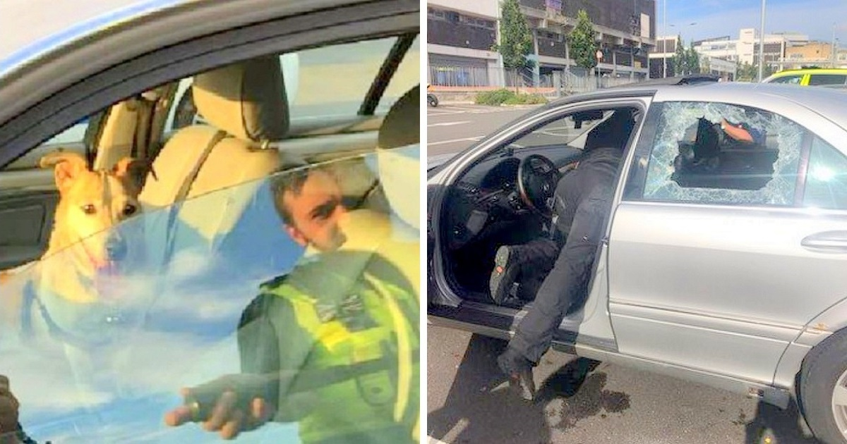 Owner Gets into Argument With Cop Who Was Forced to Smash Window to Save Dog from Hot Car