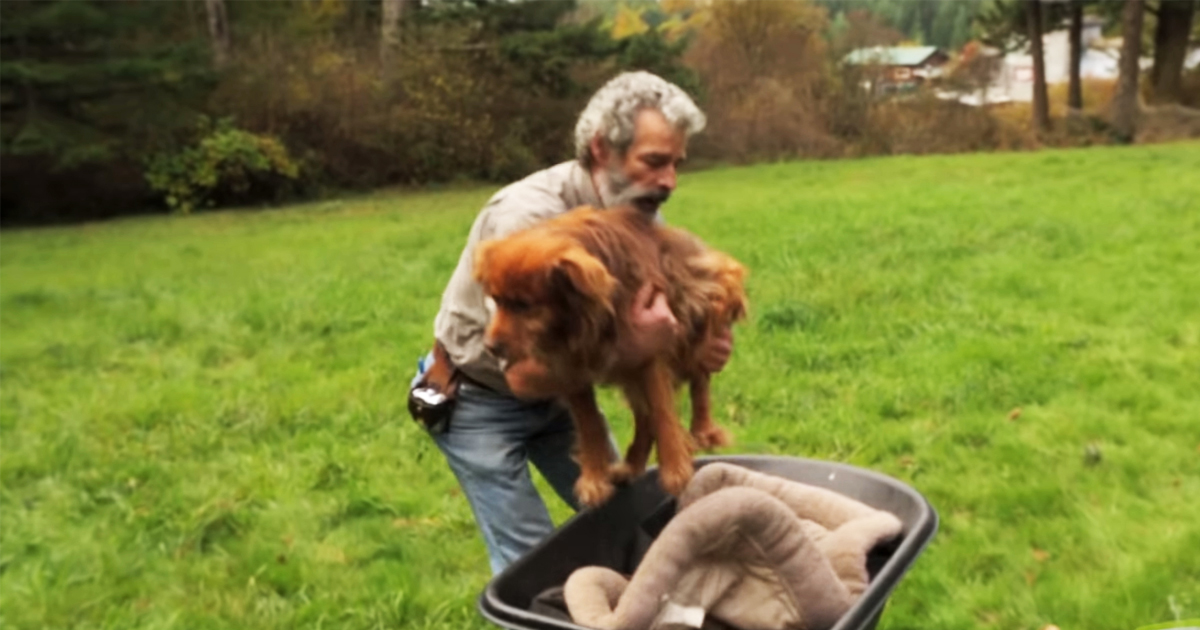 Dog Rescuer Gets the Surprise of a Lifetime as His Story Touches Millions