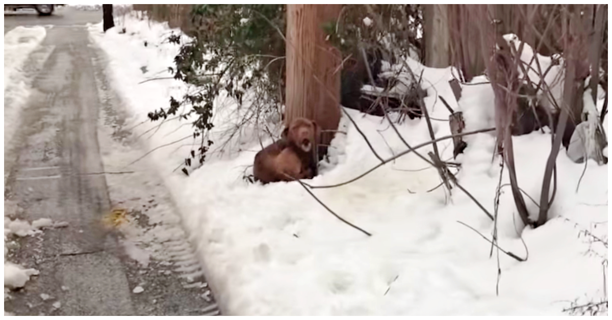 Shivering Dog Screamed For Help In His Bed Made Of Snow Until Someone Finally Heard Him