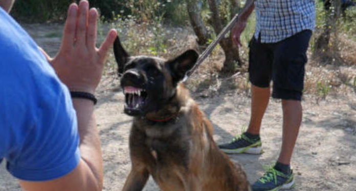Saving aggressive dogs from euthanasia - Eric Tramson