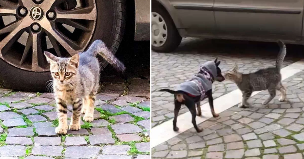 Stray Kitten Waits Outside For Her Puppy Friend Every Single Day