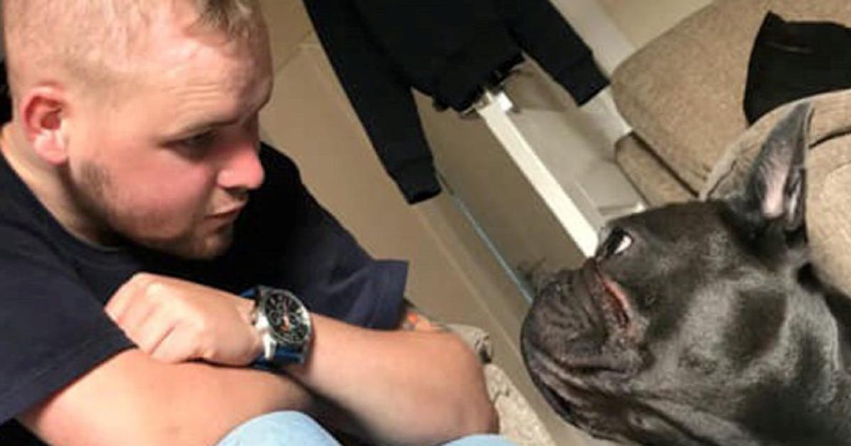 Loyal French Bulldog Dies Within Minutes Of Owner Passing Away From Cancer