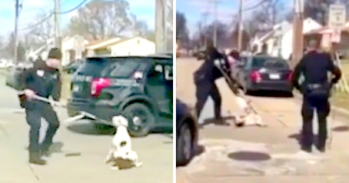 Cops Use Taser at Terrified Runaway Dog and Arrest Woman Who Protests at the Brutal Scene