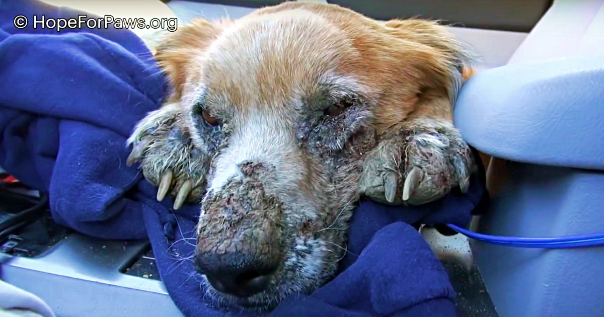 Unhealthy Homeless Dog Closed His Eyes, Knowing He Was Finally Safe For First Time