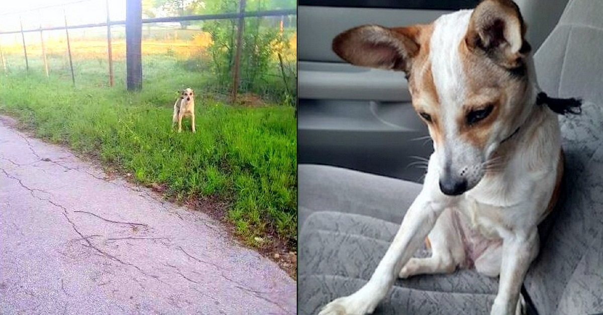 Dog Abandoned at a Dumping Ground Just Wanted to Kiss Her Rescuer