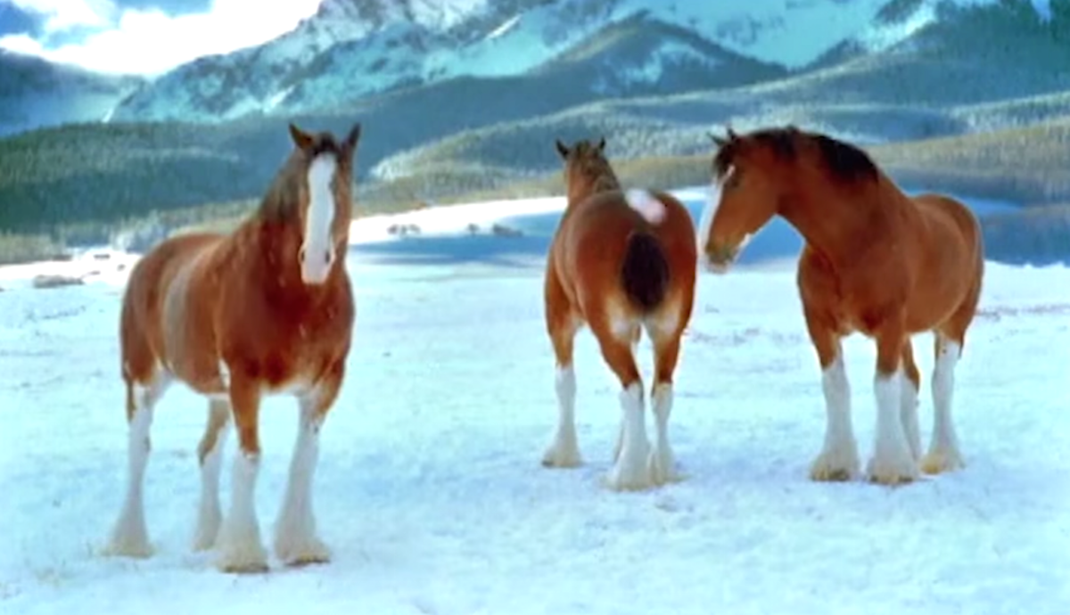 Christmas Clip Shows Clydesdales Shouldn't Be Messed With In Snowball Fights