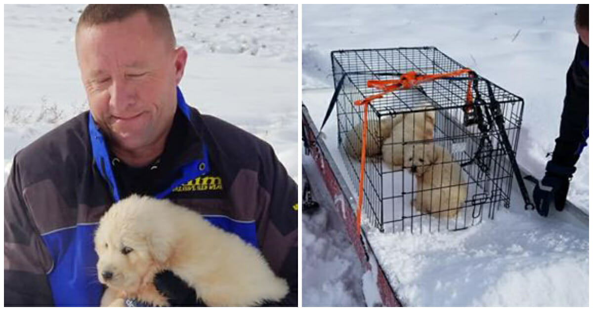Couple Snowmobiling Stumbles Upon 3 Shivering Pups Fighting for Survival