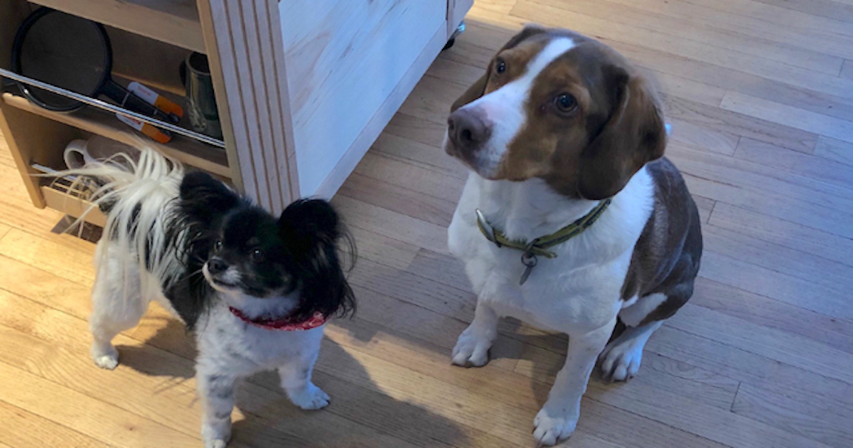 Police Showed Up To House Just To Find It Was Two Dogs Who Called 911 Sixteen Times