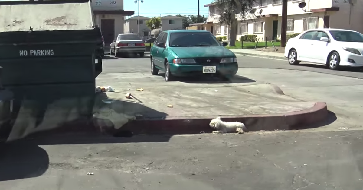 Dog With Crushed Pelvis Was Ignored On The Side Of The Street For 24 Hours