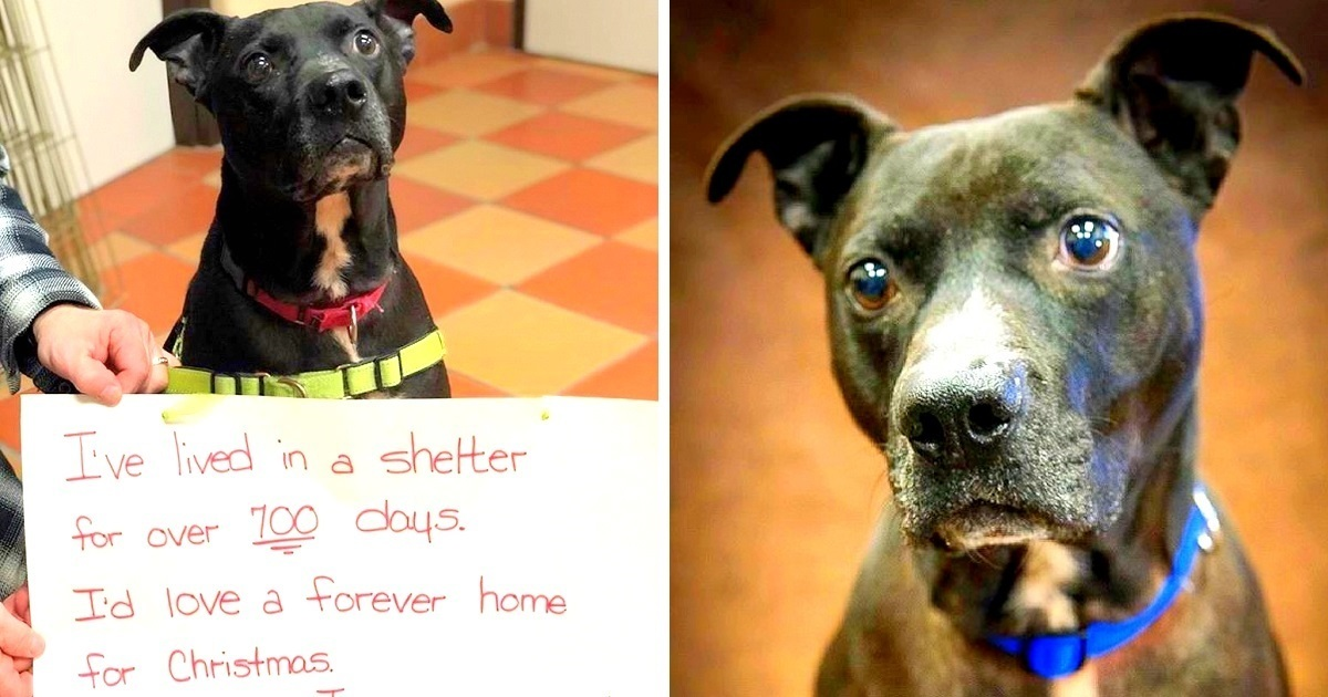 Sad Dog Spends 700 Lonely Days in Shelter Begging for Someone to Give Him a Home