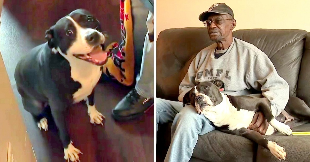 Disabled Veteran Gets Ultimatum – Get Rid Of His PTSD Support Dog or Get Evicted