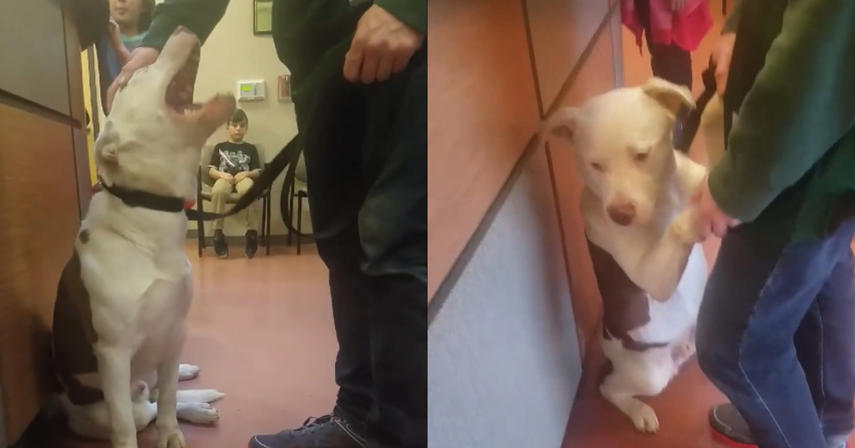 Dog Clings to Owner at the Shelter the Moment He Realizes He's Being Surrendered