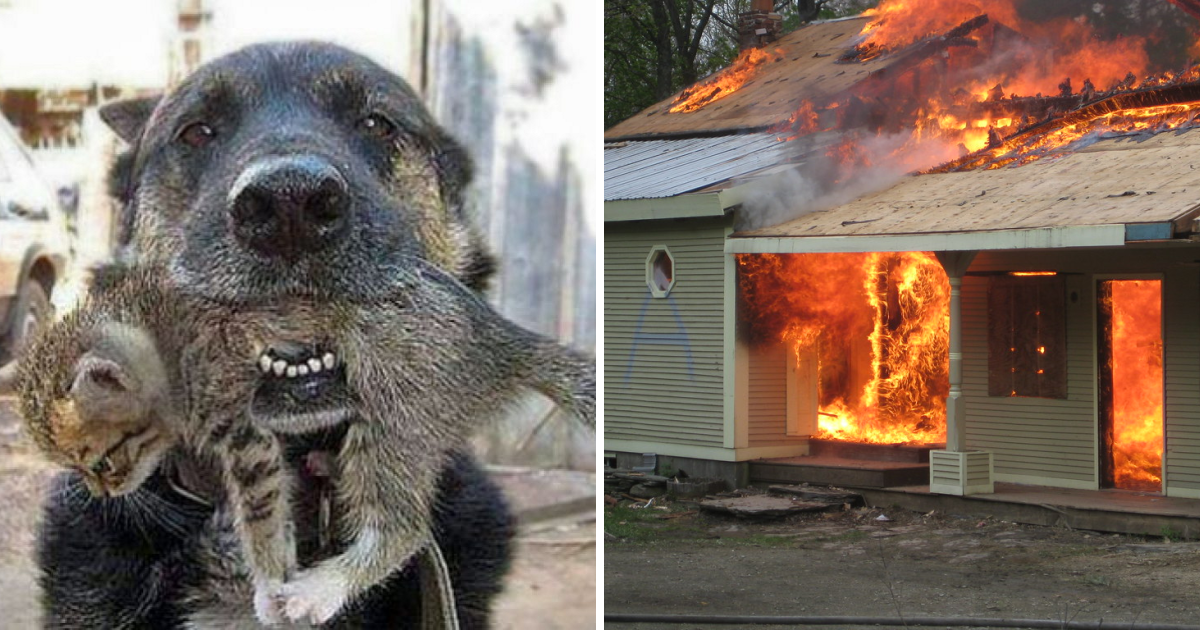 Brave Dog Risks His Own Life in House Fire to Save His Little Feline Friend