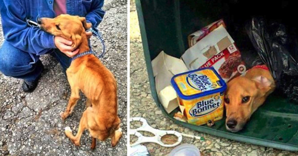 Woman Threw Her Dog in the Trash So That She Could Move in With Her Boyfriend