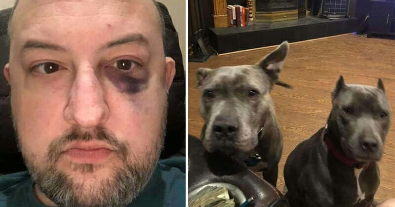 Man rescues two abandoned pit bulls — they repay him by rescuing him from assault