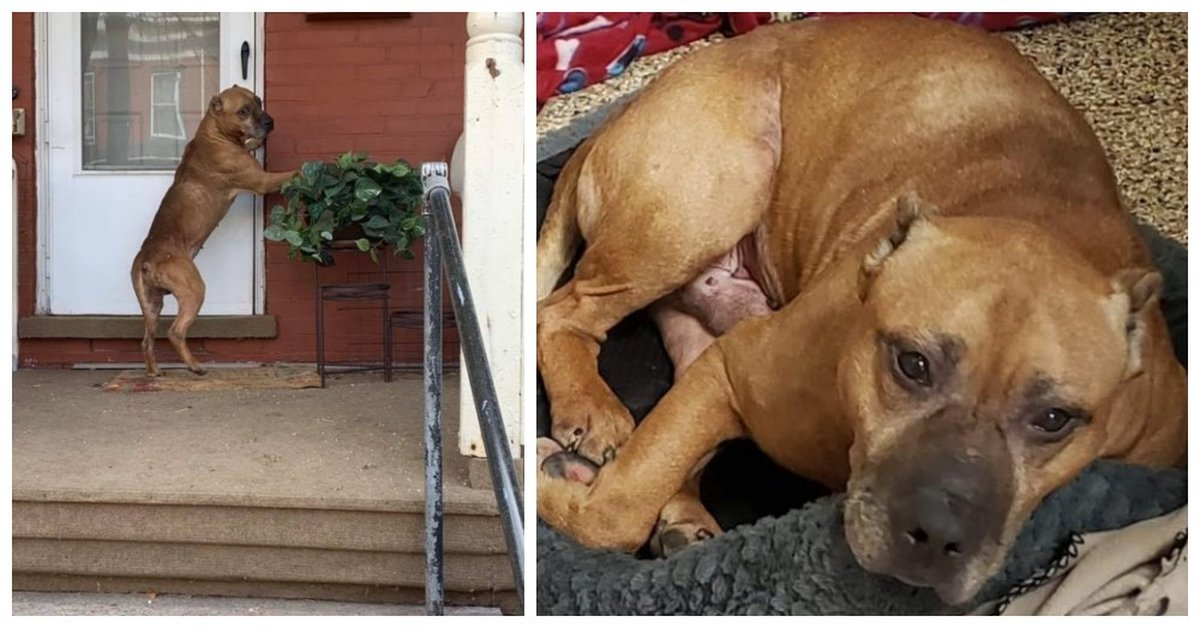 Dog Waited Outside Empty Home For Weeks After His Family Moved Away And Left Him Behind