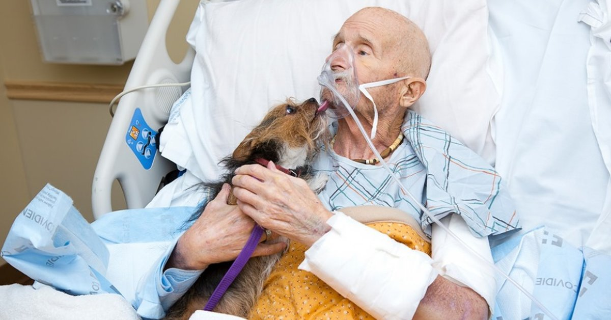 Vietnam Veteran's Dying Wish Was to See His Beloved Yorkshire Terrier One Last Time