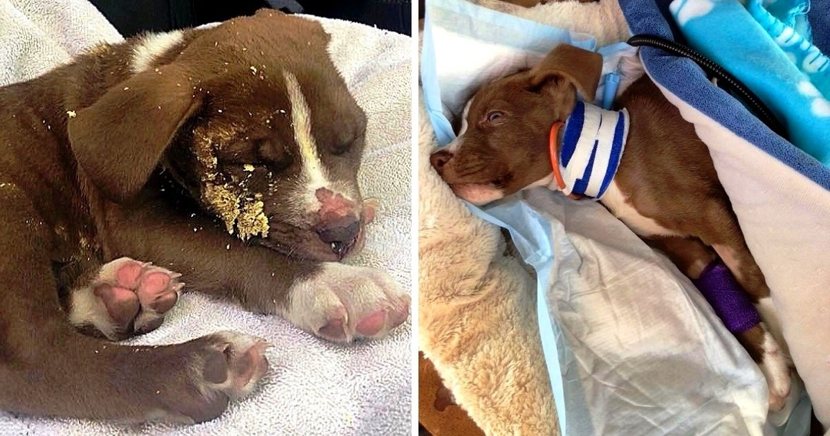 Owners Abused Him and Dumped Him in the Bushes to Die