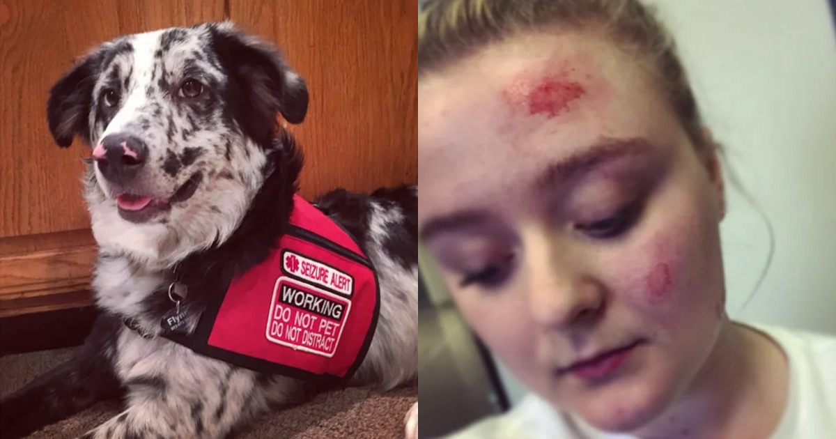 One Teenager's Scary Experience Is Exactly Why We Should Never Pet a Service Dog