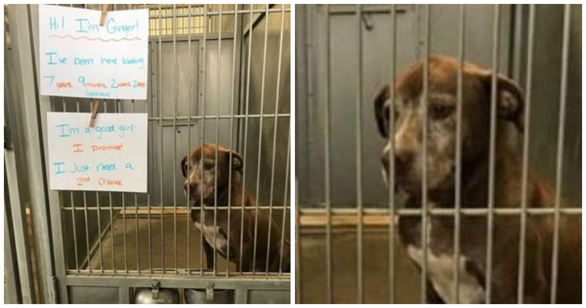 "Lonely dog that has been in a shelter for almost 8 years begs someone to give her a ""second chance"""