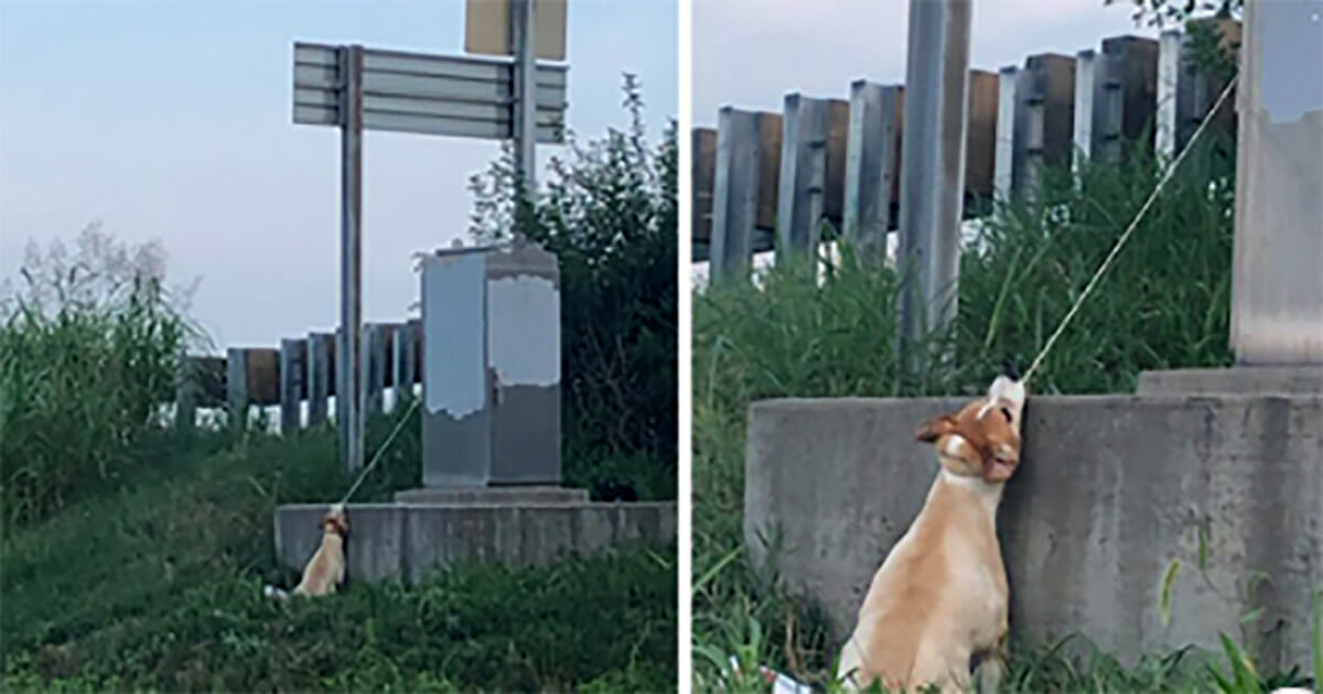 "Man Stops His Car after Spotting Dog ""Hanging"" from a Power Box Struggling to Breathe"