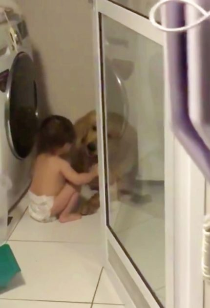 Toddler in Diapers Comforts Petrified Golden Retriever During Thunderstorm