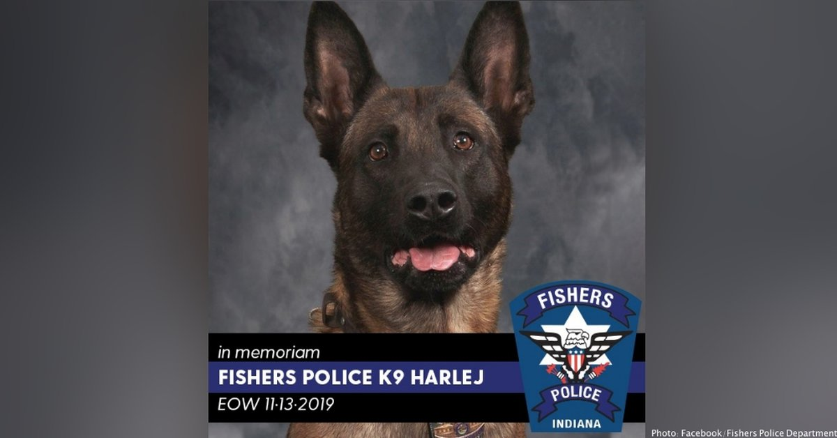 Hero K-9 Shot Dead in the Line of Duty