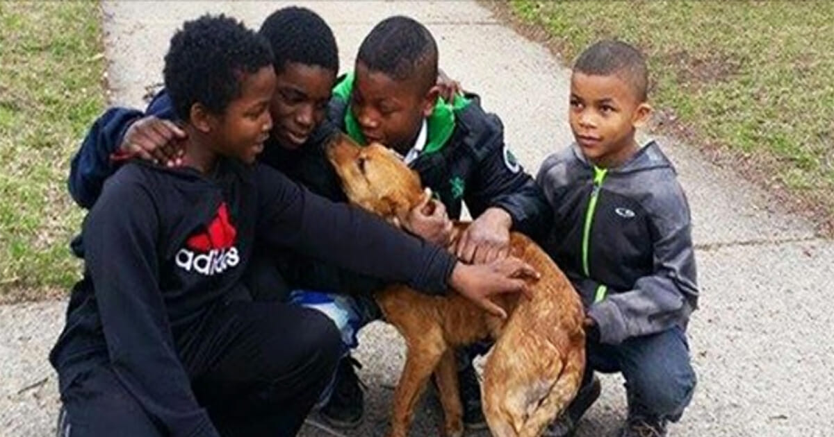4 Young Boys Save Starving Dog Tied With Bungee Cords at the Back of a House
