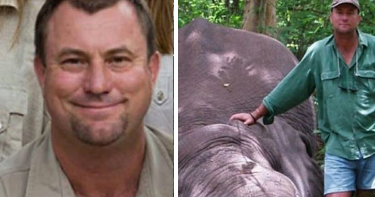 Shot Elephant Collapses on Top of Big Game Hunter Crushing Him to Death
