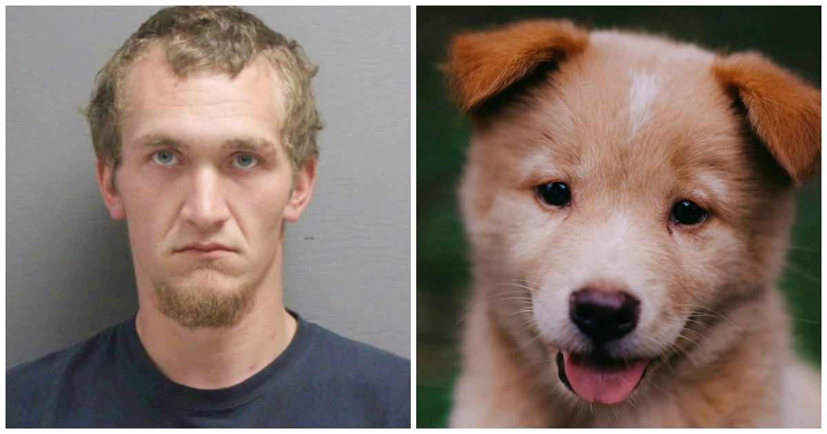 Puppy Beaten to Death by Owner's Boyfriend because It Chewed His Headset
