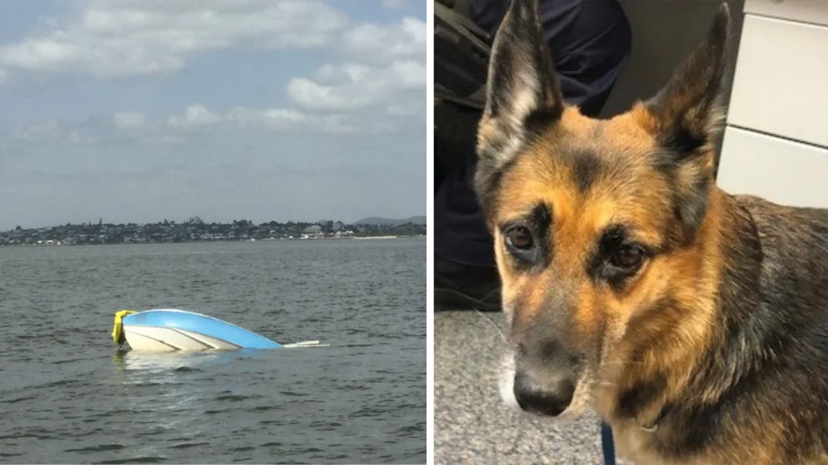Brave German Shepherd saves owner by treading water for 11 hours after their boat sinks